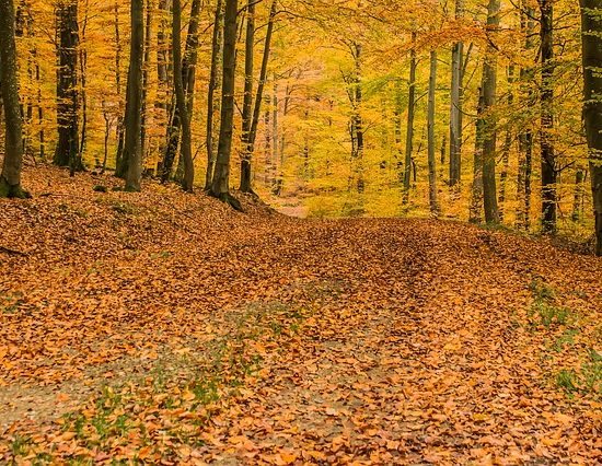 Three Ways to Tackle Fall Leaves