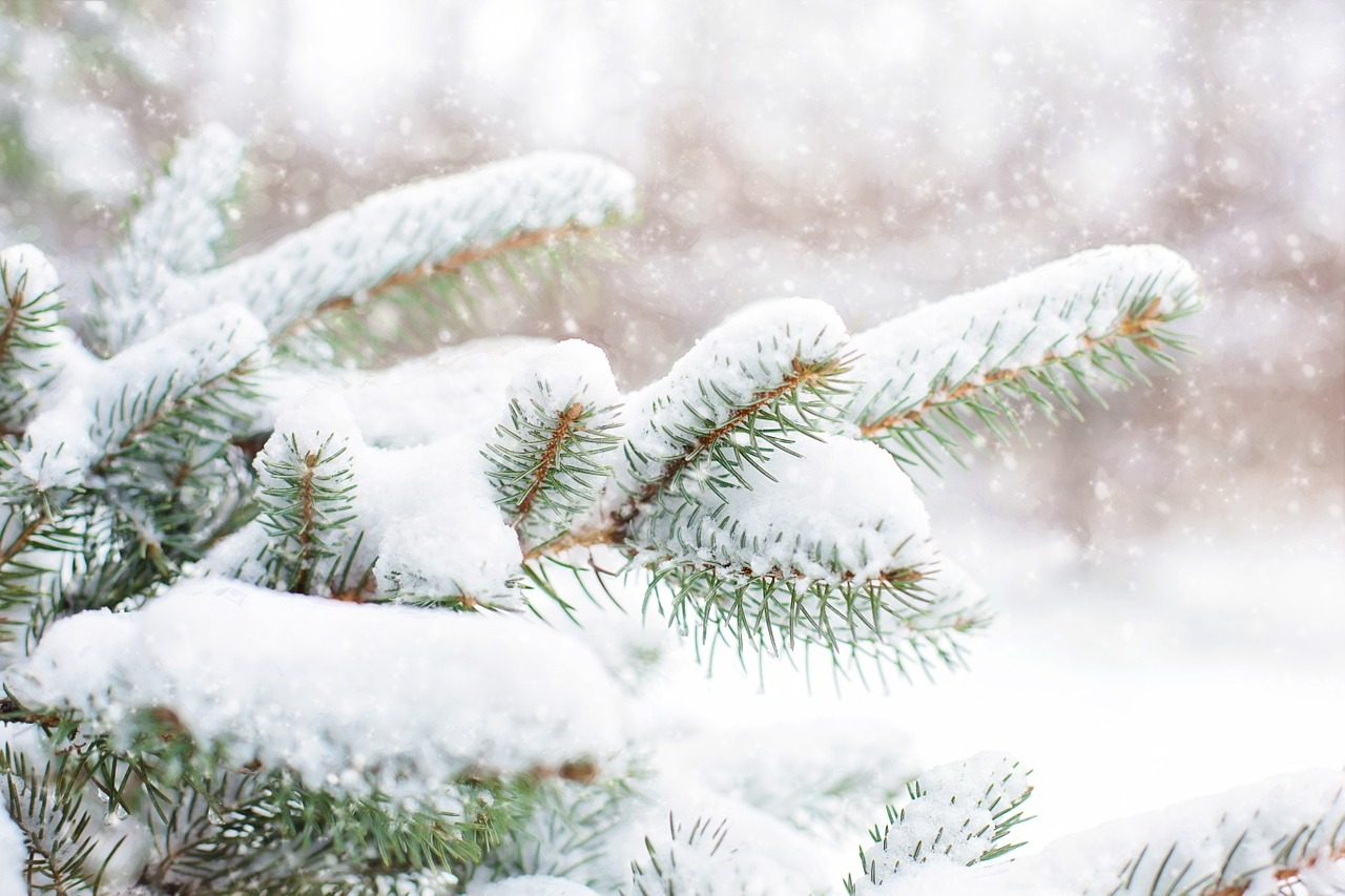 Top 5 Christmas Tree Farms In Oregon And Washington